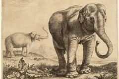 The-elephant-Hansken-Dutch-artist-Herman-Saftleven-Museum-animal-art-history-prints-brimus519_productlarge1