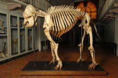 elefant-5051